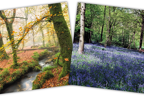 LRC06 Autumn Leaves & Bluebell Wood Cards (6 cards per pack - 3 each of