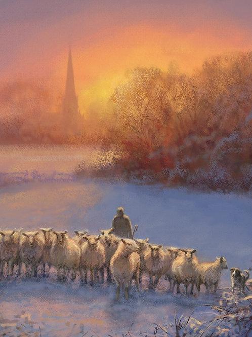 AFC08 Shepherd