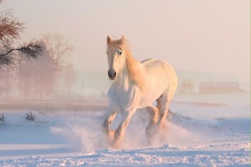 SR12 Horse in Snow
