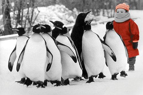 GW13216 Penguin Conga!