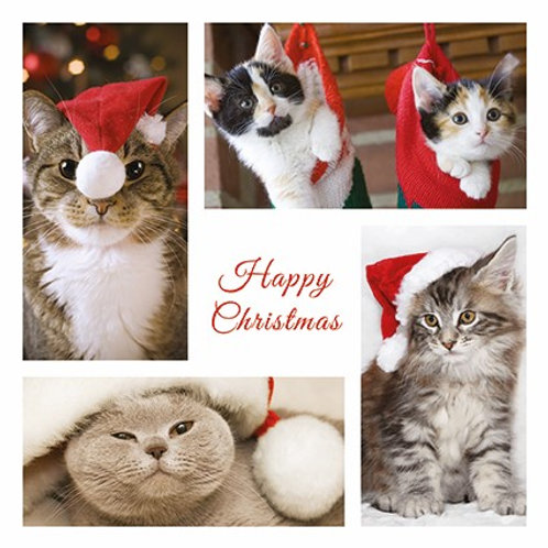 AFC07 Christmas Cats