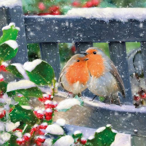 SR13 Snowy Robins