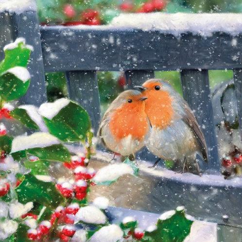 SAN10 Snowy Robins