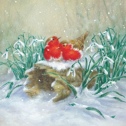SAN15232 Robins & Snowdrops