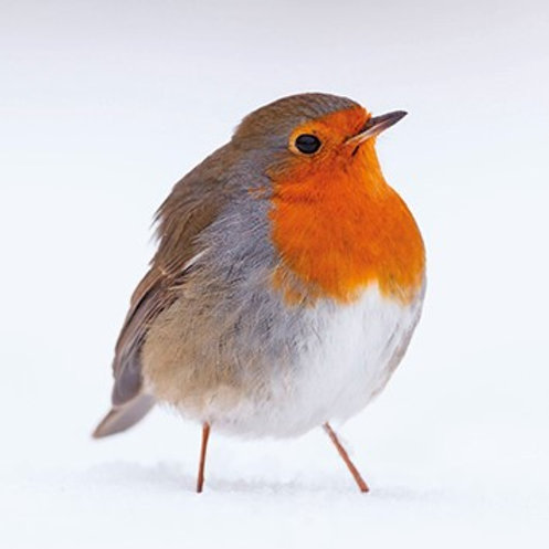 MS17198 Winter Robin