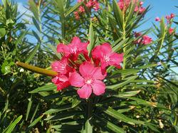 Foliage Pink 3