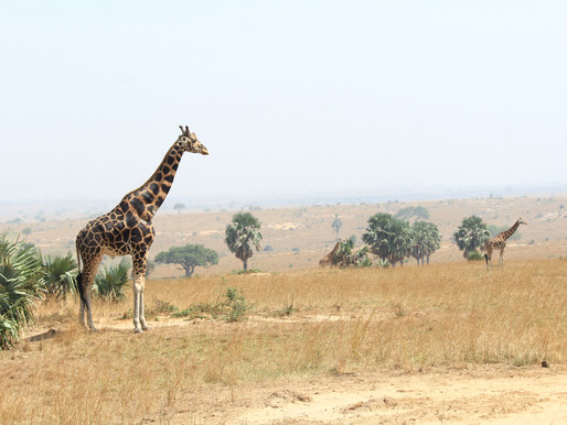 National Parks to Visit in Uganda