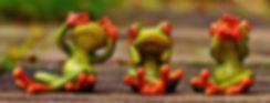 frogs-1274769_1920.jpg