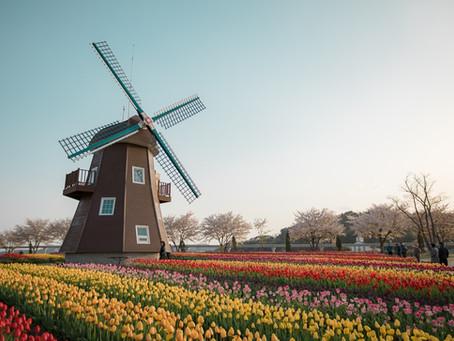 Bienvenidos a Holanda: Reflexiones sobre el duelo y el dolor