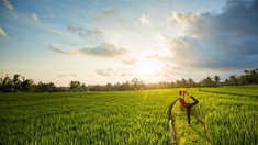 canggu rice field.jpg