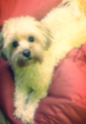Mandy the dog