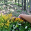 Thumbnail: Goldenrod Tincture