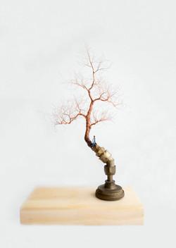 大樹底下好遮蔭?A tree protects? (Taipei)