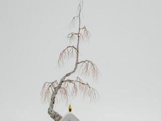 A tree protects? (Raincoat Man)