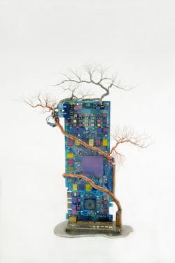 銀泥鐵樹 Iron Tree VI
