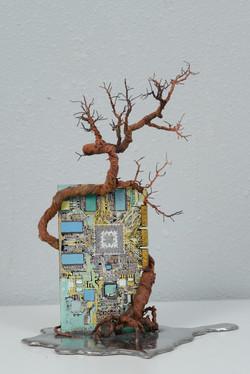 銀泥鐵樹(四) Iron Tree IV