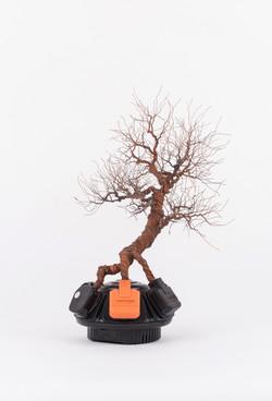 銅樹 Socket Tree