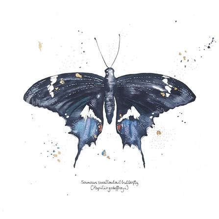 Samoan Butterfly