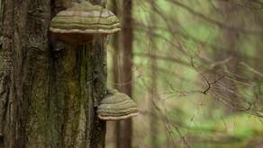 Melyik fa dől ki viharban? Hogyan győződhet meg arról, hogy biztonságos-e egy fa?