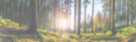 AdobeStock_290524025 halványított háttér