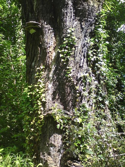 tree-252204_640.jpg