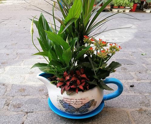Taza con plantas!!