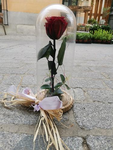 Cupula con rosa