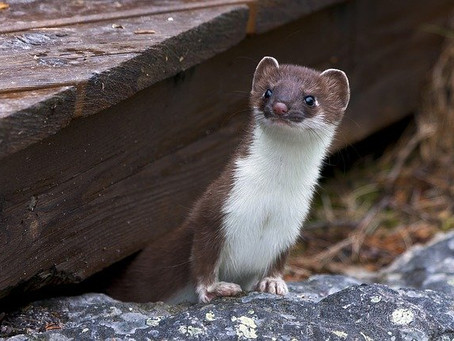 Weasel Words: What are they, and how should you use them?