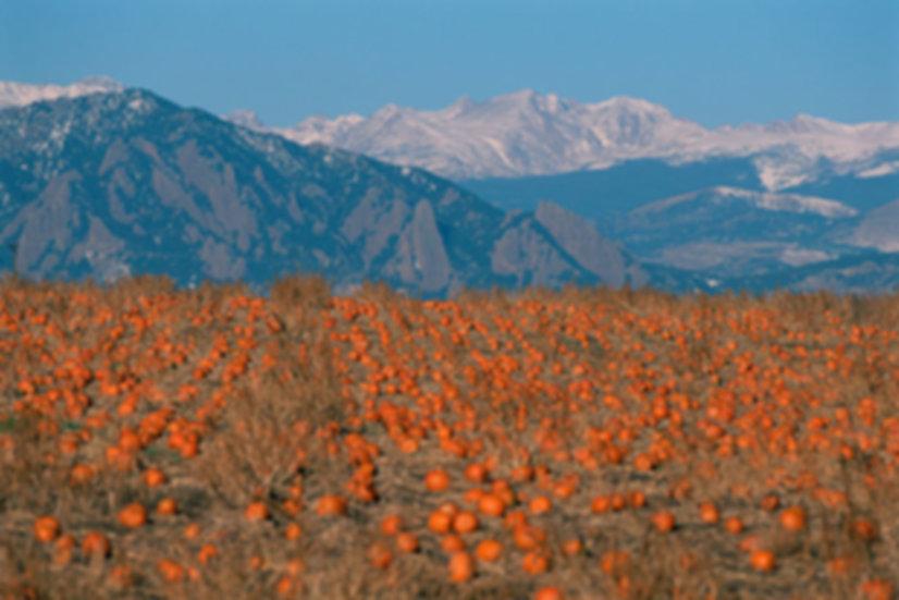 Boulder-County-Pumpkin-Patch---The-Bould