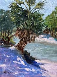 Jupiter Beach Park Palm Tree By Lagoon.j