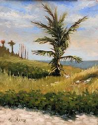 DELRAY BEACH PALM TREE 9X12 Oil on Panel $650.jpeg