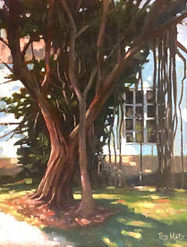 Banyan at Stuart Park.jpg