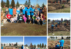 Planting Trees in Forest Lawn