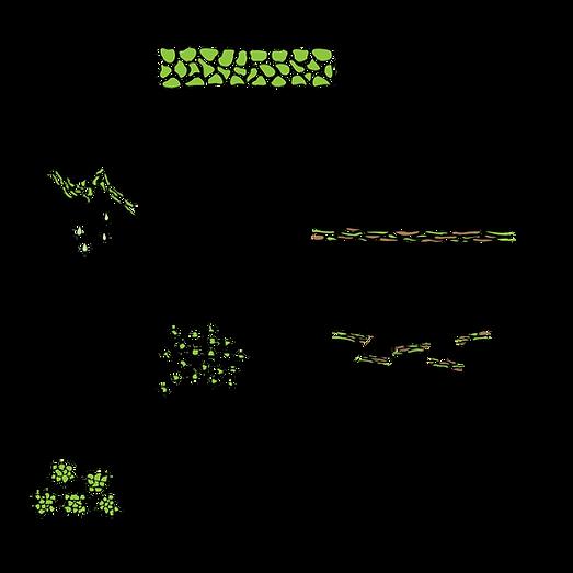 barleygreen processing method
