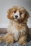 Pet Portraits in Wiltshire by Matt Curtis Photography