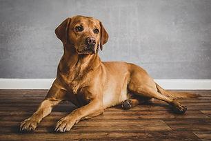 Pet portraiture and fine art pet portraiture