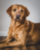 Dog Photography in Wiltshire by Matt Curtis Photography