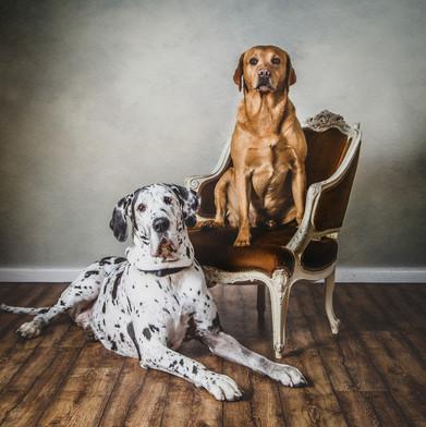Four legged friends