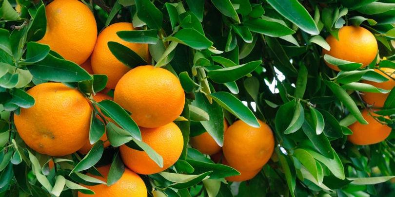 Fruit001.jpg