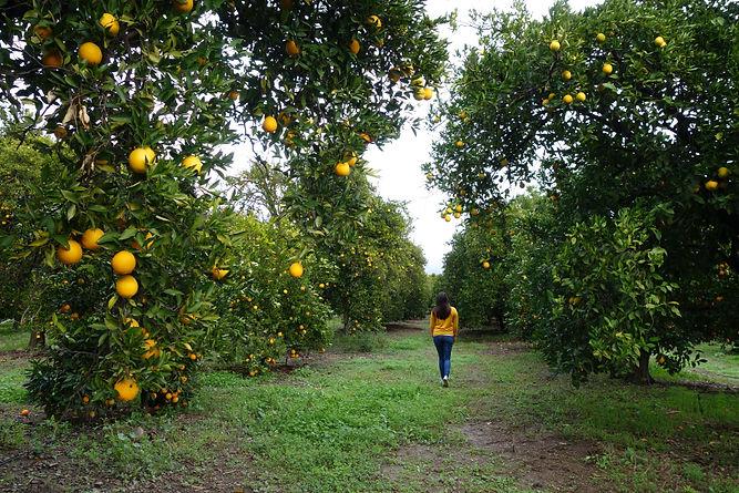 Fruit003.jpg