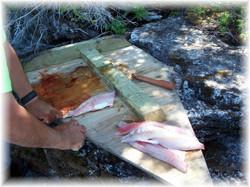 Cormorant Fishing 2008 (42)