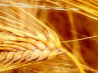 Whole Wheat versus Enriched Wheat; What's the Difference?