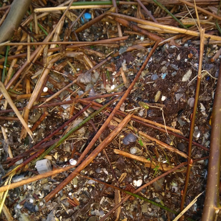 Microplastics in the Nissan River