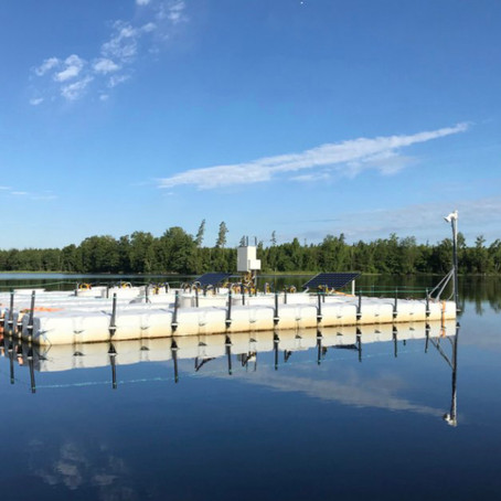 Testing the effects of browning on the pelagic lake food web of Lake Bolmen