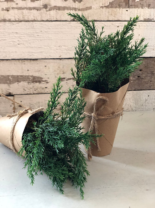 Plant in paper wrapped