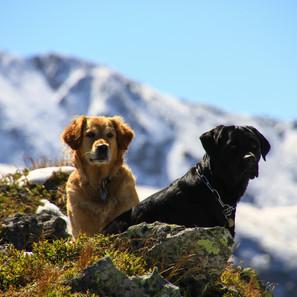Meine Hunde Lea und Kira