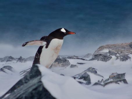 Climbing Past Penguin Heaven