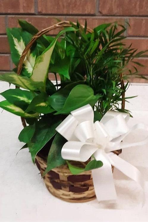 Planter (Dishgarden)