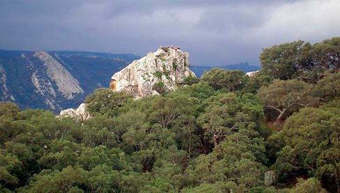Parque Natural de los Alcornocales - Buitres leonados