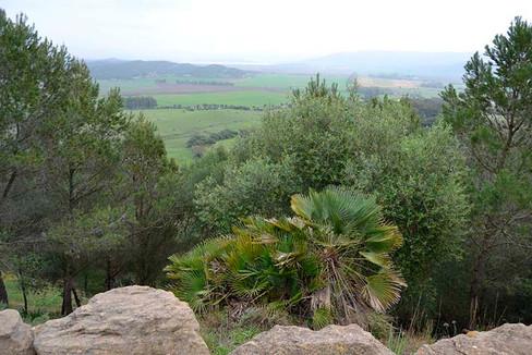 Parque Natural de los Alcornocale